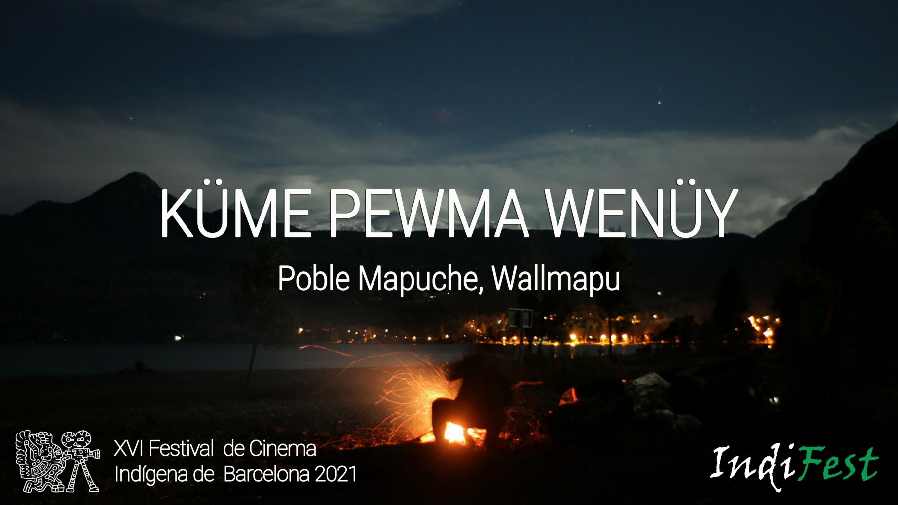 Kume Pewma Wenuy cat